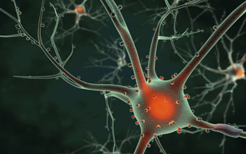 Illustration showing the cell body of a neuron