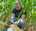 Researcher AJ Ozanich collects greenhouse gas samples in a Kellogg Biological Station corn field.