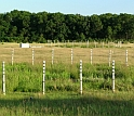 Using field plots, scientists test ecosystem responses to increased carbon dioxide levels.