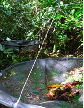 Photo of a seed trap created by Rogers and her colleagues out of screen and PVC pipe.