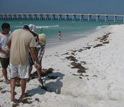 Photo of Ping Wang and colleagues looking beneath the surface of Gulf coast beaches for oil.