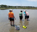 Photo of scientists sampling oysters and other shellfish in a Gulf Coast salt marsh.