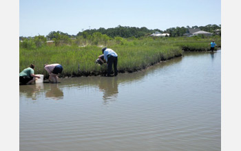 Photo of salt marsh samples being collected before the oil arrived.