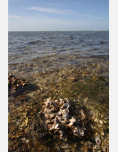 Photo of oysters from the Gulf of Mexico.