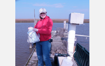 Photo of LSU graduate student Erica Simmons collecting water, sediment and oysters in Cocodrie, La.
