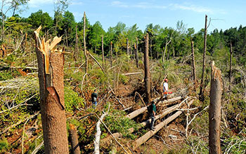 A photo of broken and snapped-off trees at a tornado impact area in Southbridge, Mass., in 2011.