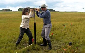 Margot Saher (left) and Roland Gehrels work together to obtain a sediment core from Barn Island salt marsh