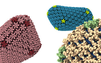 Atomic-level detailed simulations of the HIV capsid.