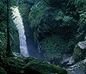 A waterfall in the midst of dense jungle.