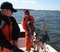 Scientists Jeff Shields and Anna Coffey of VIMS pull a crab pot from the water