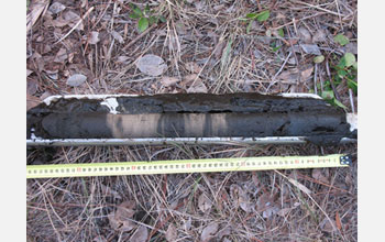 Photo of a sediment core sample collected in a laguna along the Florida Panhandle.