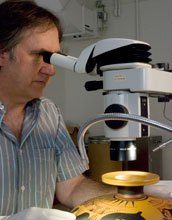 Photo of Jeffrey Maish examining an Attic black-figure kylix under a binocular stereo-microscope.