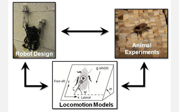 Photos of cockroach and robot showing how they are used to refine robotic design.