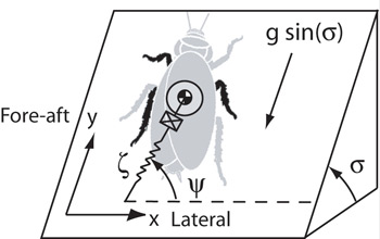 Illustration showing cockroach as point mass and forces on cockroach legs modeled as linear spring.