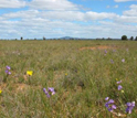 Photo of Kinypanial grassland in Australia.