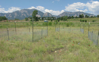 Photo of the Nutrient Network site in Boulder, Colorado.