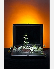 A plant on a keyboard symbolizes the use of cyberinfrastructure to further biological plant science.