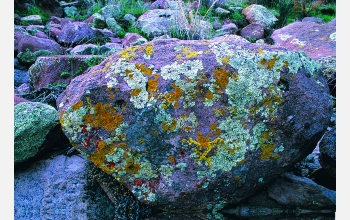 Lichen-covered boulders in the Superstition Mountains close to the Phoenix metropolitan area.