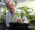 James Westwood, of Virginia Tech, studies Cuscuta, a plant that has no need for photosynthesis.