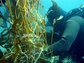At NSF's Santa Barbara Coastal LTER site, a scuba diver records data on giant kelp growth.