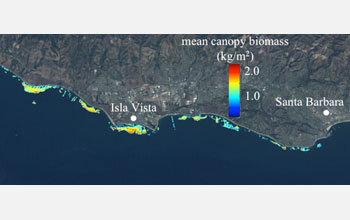 Landsat 5 image measured from 1982-2010 showing the kelp canopy biomass off Santa Barbara.
