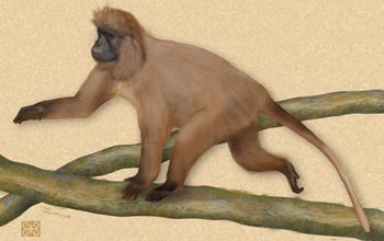 Full-body view of Lophocebus kipunji.