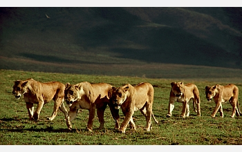 Scientists have found that being social and forming groups is a protection against prey extinction.