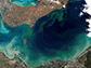 freshwater harmful algal bloom turned Lake Eric a bright blue-green