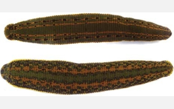 2 species of leech: above, Hirudo medicinalis, below, Hirudo verbana.