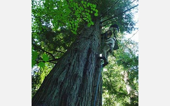 Photo of articipants in Legislators Aloft approaching a treetop.