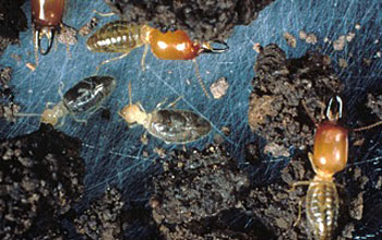 Image showing creatures that live in belowground soils