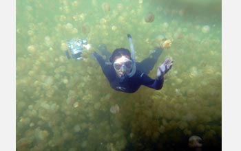 Photo of Kakani Young of Caltech using a new particle image system in Jellyfish Lake, Palau.