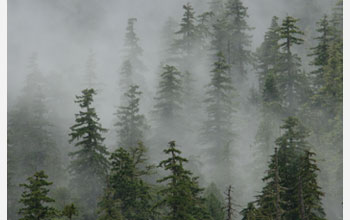 Photo of a forest covered in mist.