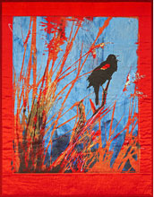 Illustration of a red-winged blackbird.
