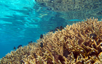 Image of the Moorea Coral Reef LTER Site.