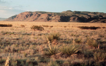 LTER Site in New Mexico