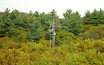 Photo of the Harvard Forest site where forest carbon exchange measurements are conducted.