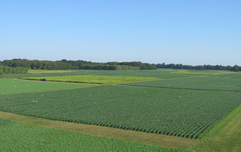 green fields at the Kellogg Biological Station LTER Site.