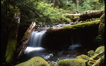 a stream flowing through a forest in the H.J. Andrews LTER site.