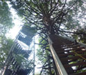 the Hemlock Tower in the Harvard Forest LTER site.