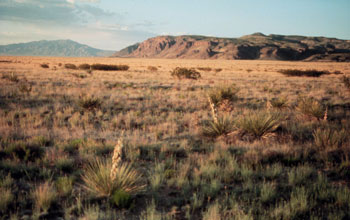 Image of a cold desert biome in the NSF Sevilleta LTER site in New Mexico.