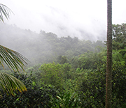 Puerto Rico rainforest