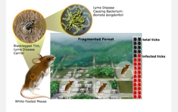 Lyme disease transmission is related to forest ecology.