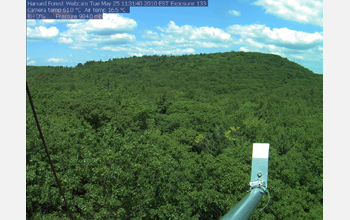 A webcam monitoring the phenology, or seasonal change, of a forest canopy.