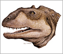Illustration of head reconstruction of Majungasaurus, a Late Cretaceous dinosaur from Madagascar.