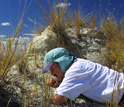 Photo of David Krause searching for tiny fossil mammal teeth in northwestern Madagascar.