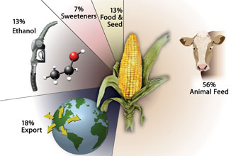 Corn is grown for food, feed and other products.