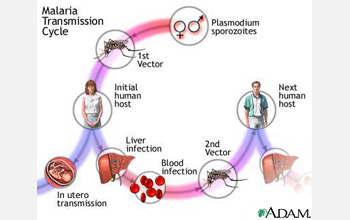 Illustration showing how malaria starts with a bite of an infected mosquito and is passed along.