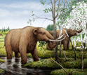 Illustration showing mastodons grazing on black ash trees in a Pleistocene swamp.