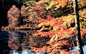 Photo of a New Englan fall scence along a pond lined with maples.